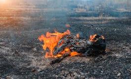 Forest Fire Árvores queimadas após incêndios florestais e lotes do fumo fotografia de stock royalty free