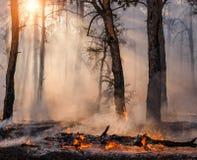 Forest Fire Árvores queimadas após incêndios florestais e lotes do fumo foto de stock