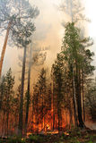 Forest fire. Fire in a forest royalty free stock photo