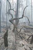 Forest fire. Fire in a wood Stock Photo