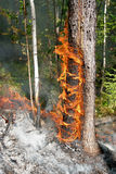 Forest fire. Fire in a forest Royalty Free Stock Images