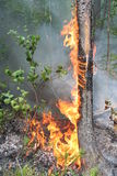 Forest fire. Fire in a wood Royalty Free Stock Photography