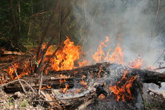 Forest fire. Fire in a forest Stock Photos