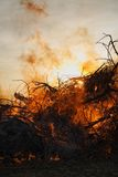 Forest fire. Vertical picture of fire flames backlit by sun Royalty Free Stock Photo