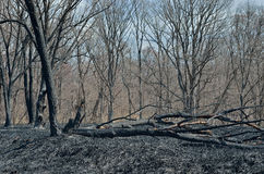 After forest fire 13 Royalty Free Stock Images