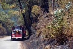 Forest Fire stock fotografie
