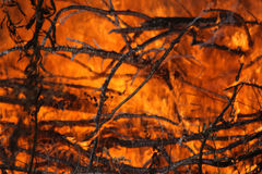 Forest Fire. A close view of a a fire stock photography
