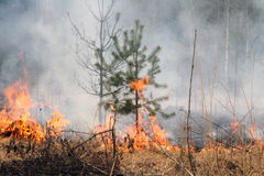 Forest fire. Royalty Free Stock Image