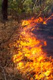 Forest fire Stock Image