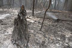 Forest after fire Stock Images