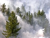Forest Fire. This is an image taken of a forest fire consuming evergreen trees Stock Photography