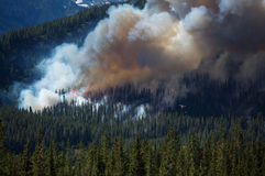 Forest Fire. Burning on mountain slopes in the Canadian Rockies Stock Photography