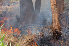 Forest fire Royalty Free Stock Photography
