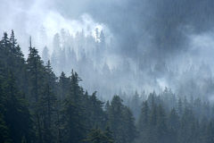 Forest Fire. Smoldering Forest Fire in Oregon Royalty Free Stock Photos