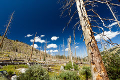 After the Forest Fire Stock Image