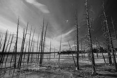 Forest Fire. Black and white scenery and forest fire Royalty Free Stock Images