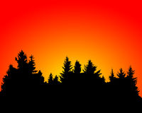 Forest fire. Silhouette of burning pine forests Stock Photo