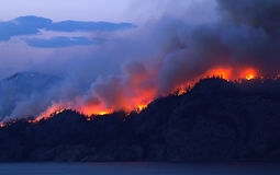 Forest Fire Foto de Stock