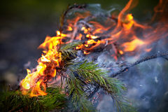 Forest Fire Lizenzfreies Stockfoto