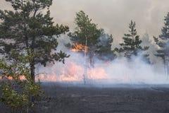 Forest Fire Foto de archivo