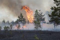 Forest Fire stockbild