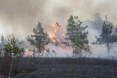 Forest Fire Fotografía de archivo