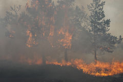 Forest Fire Stock Foto