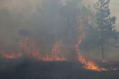 Forest Fire Fotos de archivo libres de regalías