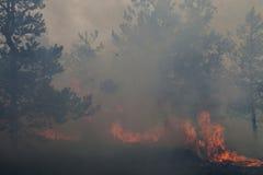 Forest Fire Fotos de archivo