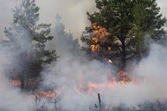 Forest Fire Fotografía de archivo libre de regalías