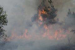Forest Fire lizenzfreie stockbilder