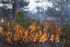 Forest Fire Foto de archivo libre de regalías