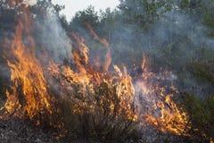 Forest Fire lizenzfreies stockfoto