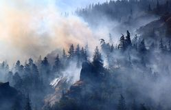 Forest Fire Royaltyfria Bilder