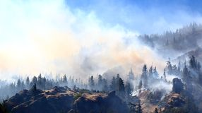 Forest Fire Image stock