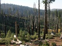 After forest fire. Area in Yosemite national park after forest fire royalty free stock images