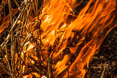 Forest Fire Imagem de Stock Royalty Free