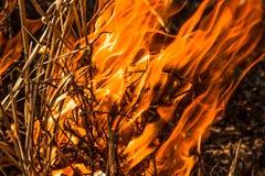 Forest Fire Lizenzfreies Stockbild