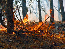 Forest fire. A burning wood in the Moscow area. Original date/time: 2005:10:02 15:07:35 Royalty Free Stock Photography