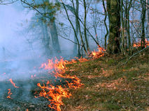 Forest fire. A burning wood in the Moscow area. Original date/time: 2005:10:02 15:20:32 Royalty Free Stock Photos