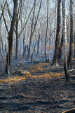 After forest fire 5 Royalty Free Stock Image