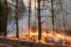 Forest Fire Lizenzfreies Stockbild