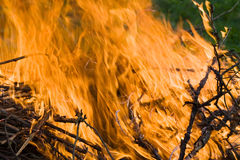 Forest fire Royalty Free Stock Images