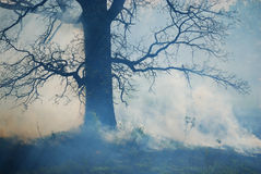 Forest Fire. With smoke surrounding a tree Stock Photos
