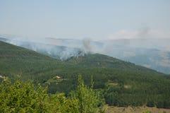 Forest Fire Royalty-vrije Stock Afbeeldingen