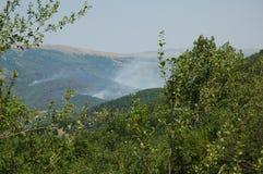 Forest Fire Royalty-vrije Stock Fotografie