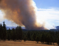 Forest Fire. Horizontal image of a forest fire in eastern Oregon Stock Image