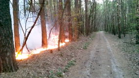 Forest Fire archivi video