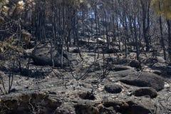 Forest Fire Photographie stock libre de droits
