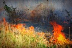Forest Fire Immagini Stock Libere da Diritti